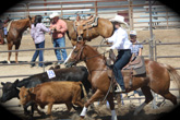 Events at B Bar J Cattle Ranch